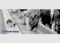 Masterfeeds ShowStopper Accelerator Beef Feed (Grower)- 20KG