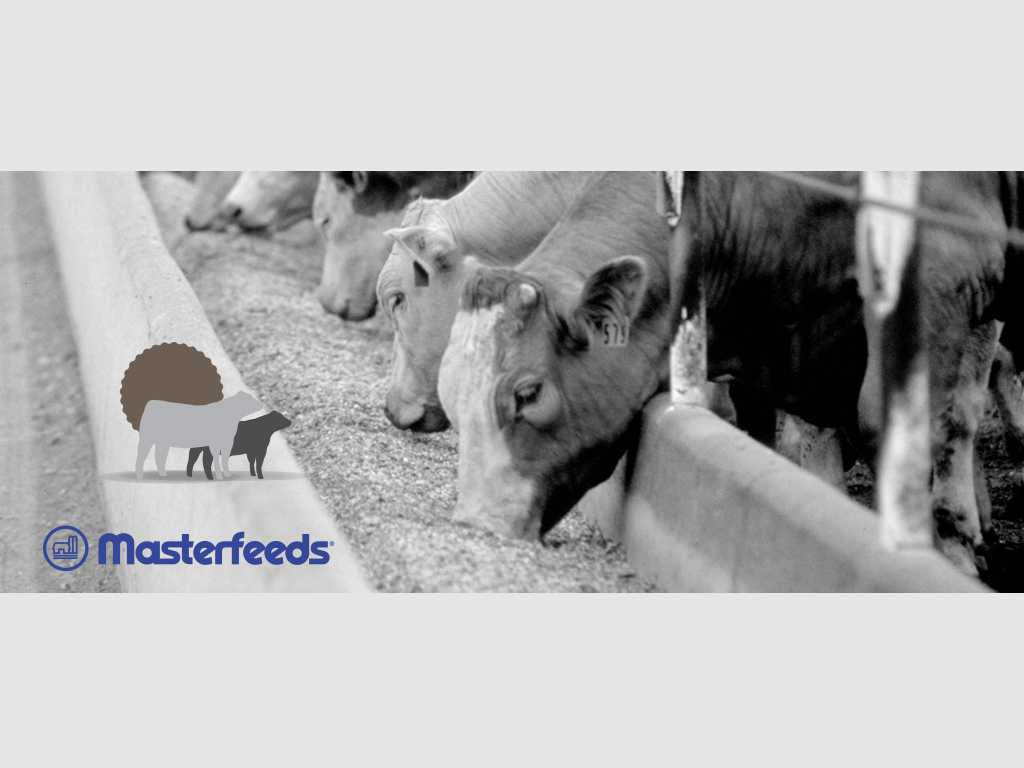 Masterfeeds ShowStopper Cruiser Beef Feed (Starter) - 20KG