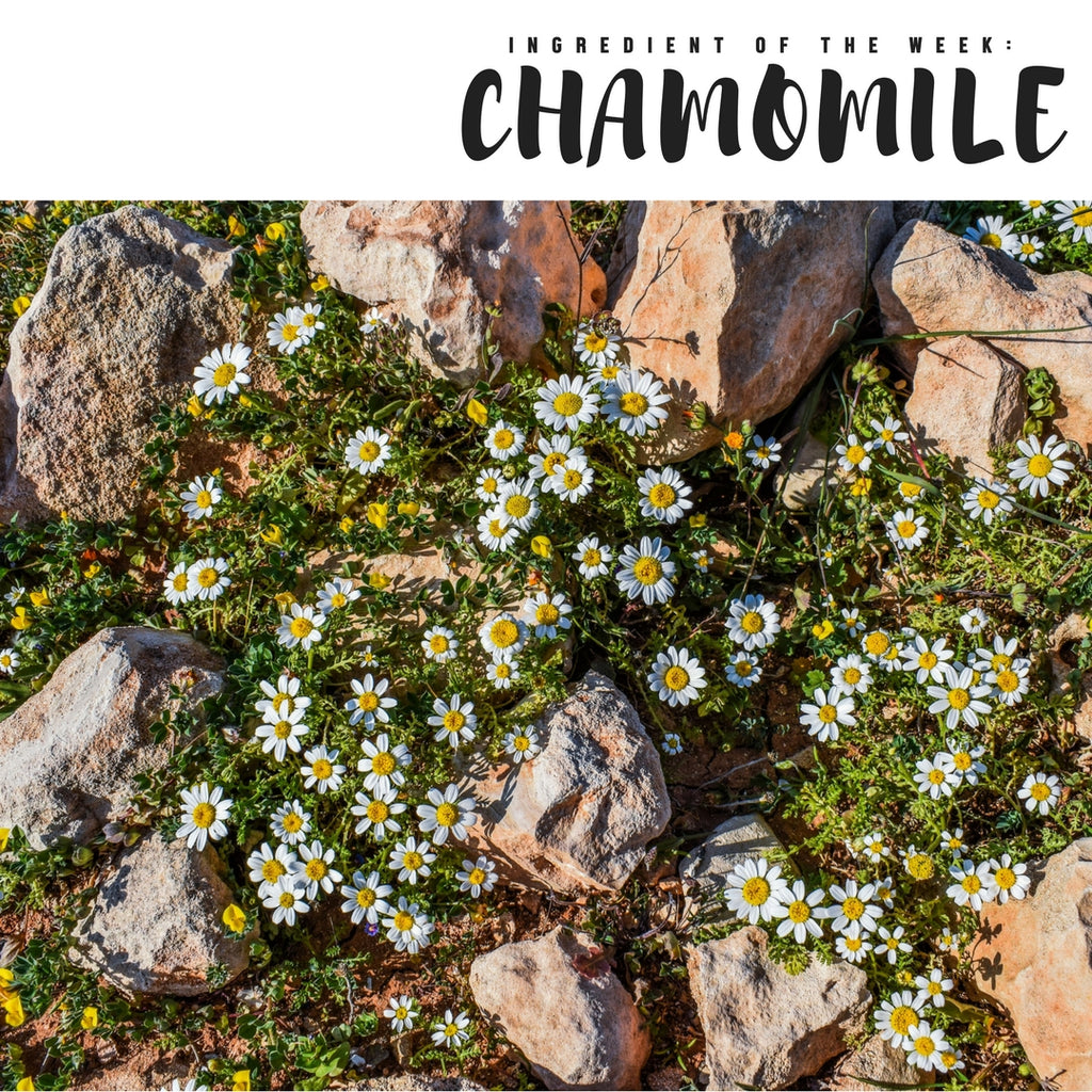 Ingredient of the Week: Chamomile