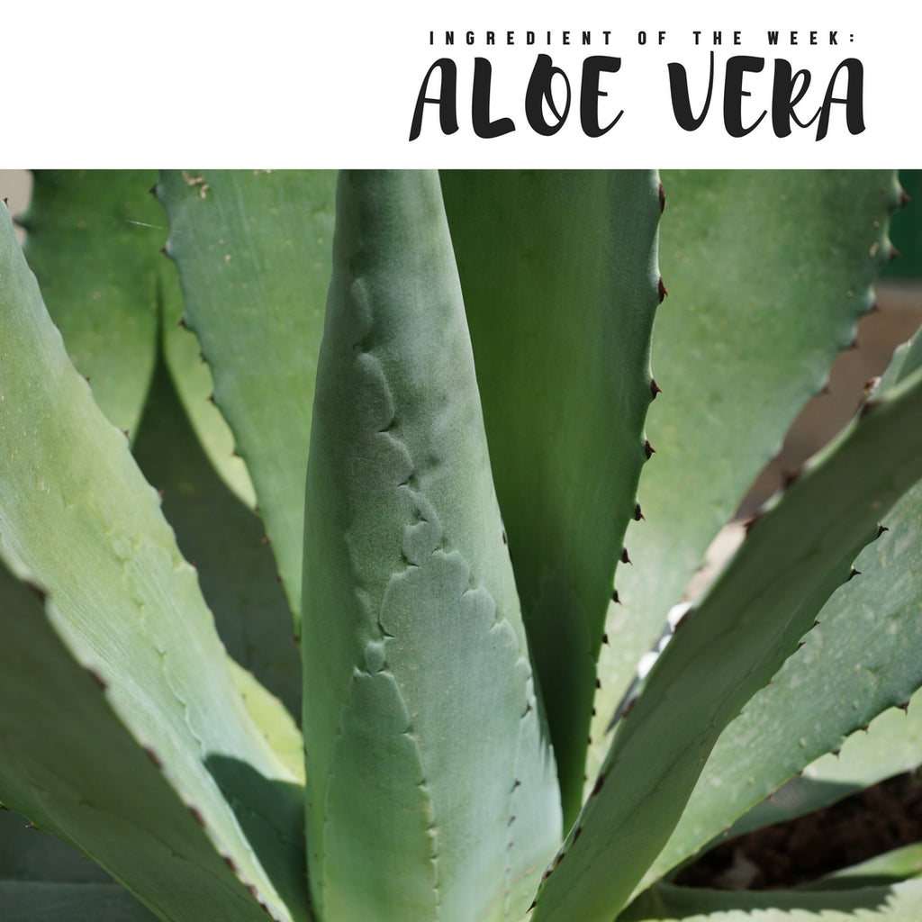 Ingredient of the Week: Aloe Vera