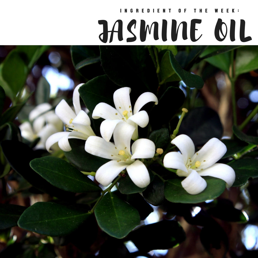 Ingredient of the Week: Jasmine Oil
