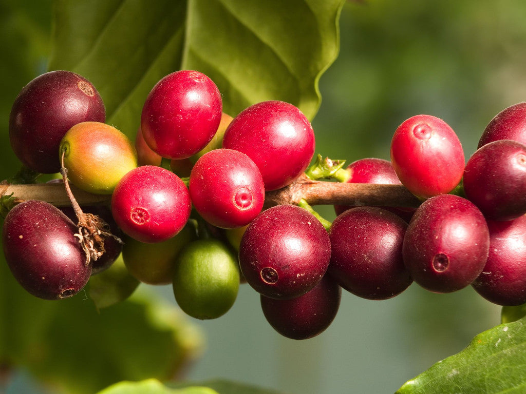 Camu Camu: Your Skin's New Best Friend