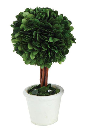 "Round Tree w/ Stem Preserved Boxwood Topiary 4"" x 9"""