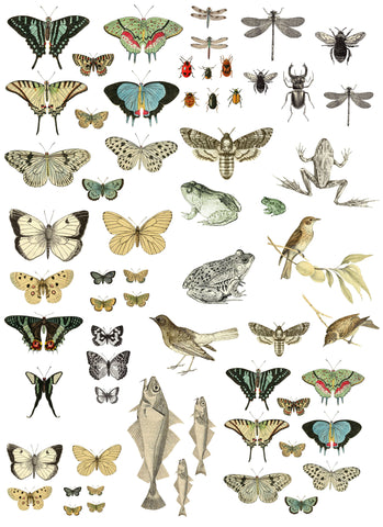 "IOD Decor Transfer Entomology Etcetera 24 x 33"" by Iron Orchid Designs"