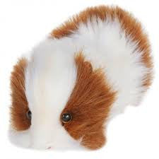 Guinea Pig Brown And White