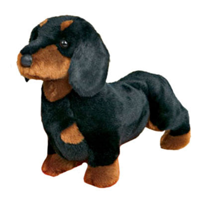 Spats the Dachshund