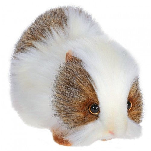Guinea Pig Gray And White