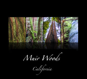 """MUIR WOODS"" National Park, California"