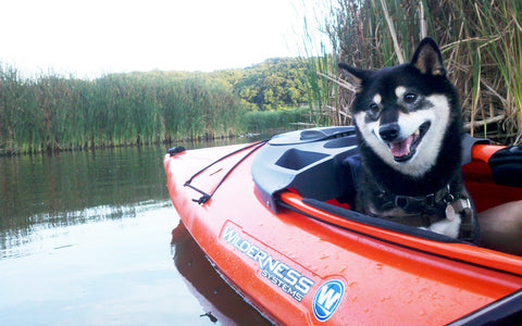 Dog in sit inside kayak
