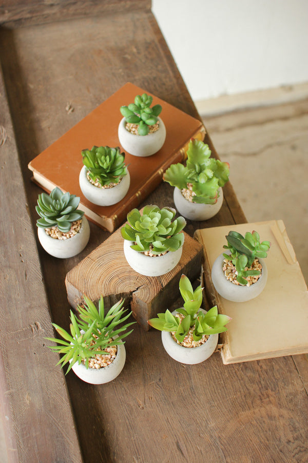 SET OF EIGHT SMALL SUCCULENTS WITH ROUND CEMENT POT