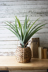 Artificial Aloe in a Woven Pot