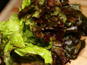 Red Leaf Head Lettuce