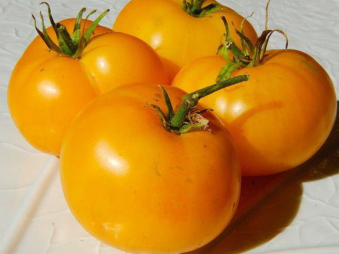 Yellow tomatoes
