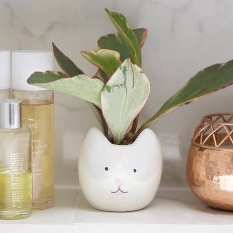 Cute white cat planter for cat lovers