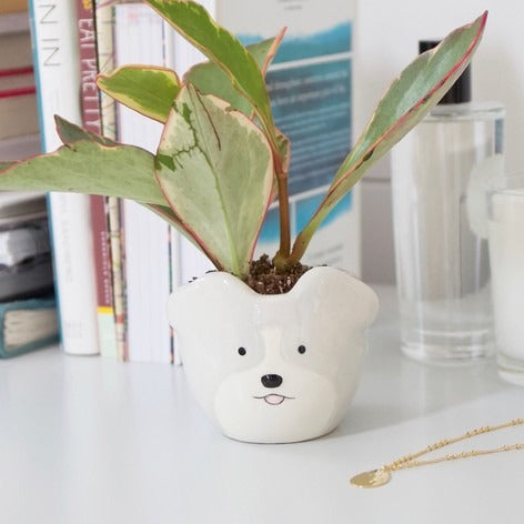 Cute Ceramic Dog Planter