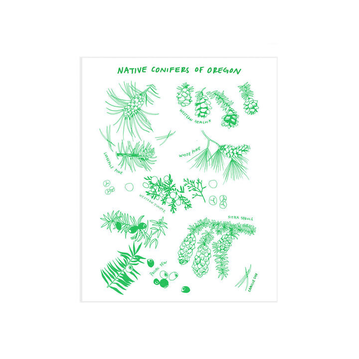Oregon Native Conifers Card by Camille Shu
