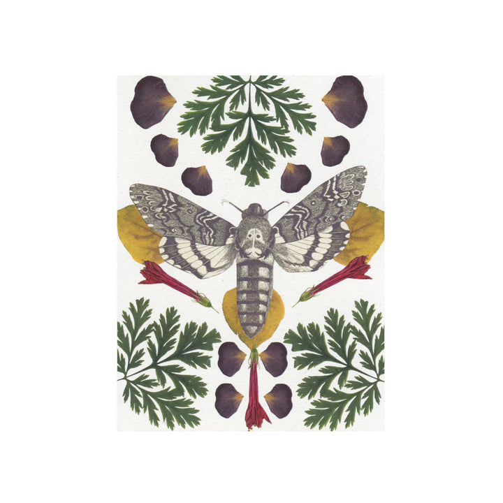 Moth Greeting Card by Greet & Repeat