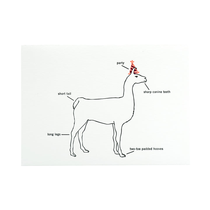 Happy Birthday Party Llama Card