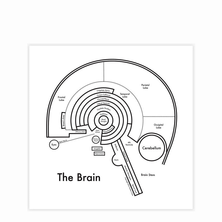 The Brain Map by Archie's Press