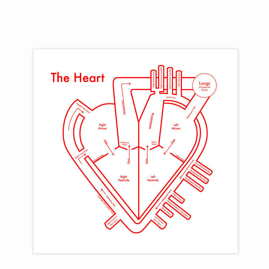 The Heart by Archie's Press