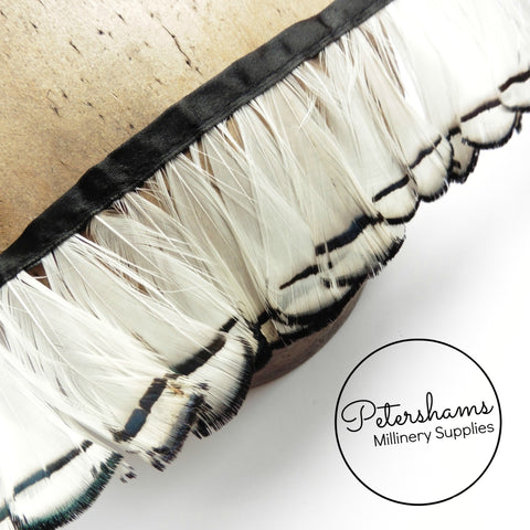 Lady Amherst Feather Fringe - 50cm