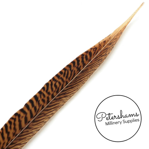 Golden Pheasant Feather (Single Feather) - 30-33cm