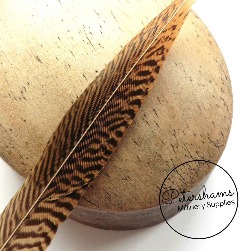 Golden Pheasant Feather (Single Feather) - 20-25cm