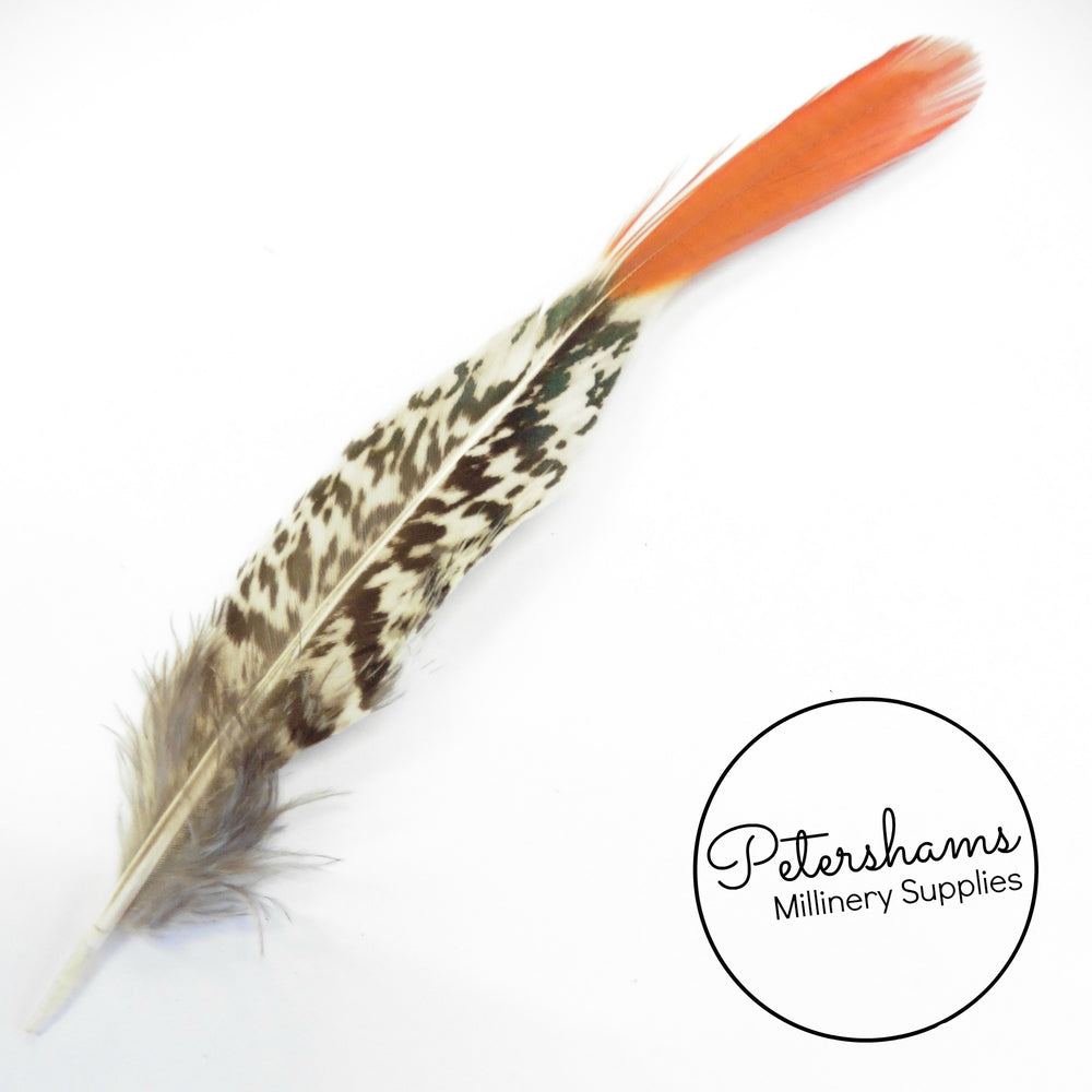Lady Amherst Pheasant Feather Red Tips 15-19cm - Pack of 5