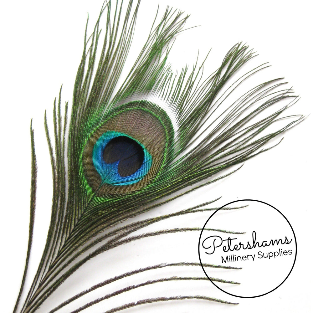 Single Peacock Eye Feathers (26-30cm) - Natural Green