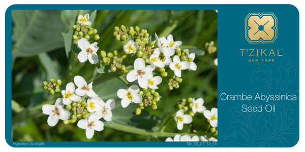 Ingredient Spotlight: Crambe Abyssinica Seed Oil