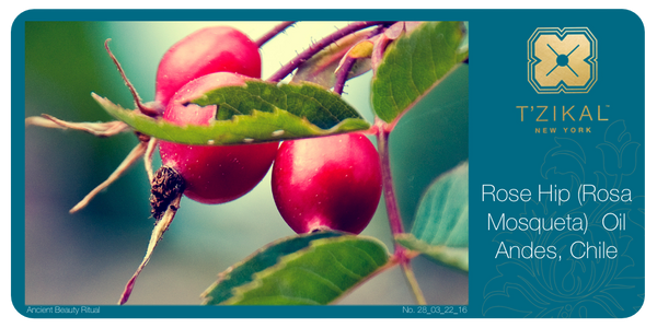 Ancient Beauty Ritual: Rose Hip (Rosa Mosqueta) Oil, Andes, Chile