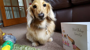 Dog Facing Forward With Birthday Card
