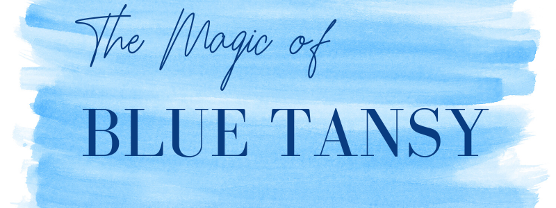 the magic of blue tansy