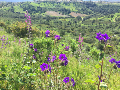 inspirational Southern California wildflower hike