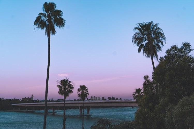 palm trees and a purple and blue sunset