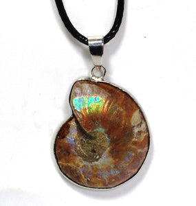 New! Natural Fossilized Ammonite Pendant Necklace Inc Cord