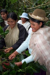 Harvesting coffee in Bolivia | Bean North Coffee Roasting Co. Ltd.