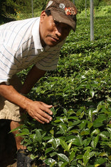 A producer with young coffee plants in Mexico | Bean North Coffee Roasting Co. Ltd.