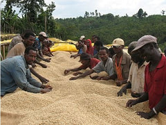 Sorting green coffee at Sidama in Ethiopia | Bean North Coffee Roasting Co. Ltd.
