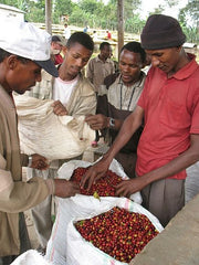 Coffee cherries at Sidama in Ethiopia | Bean North Coffee Roasting Co. Ltd.