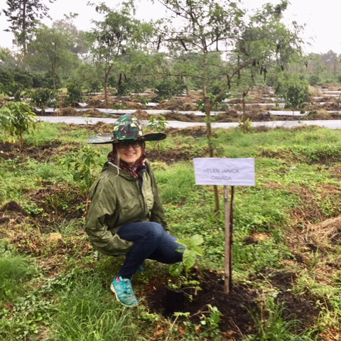 Tree planting at the Gayo Coffee Plantation and Research Facility