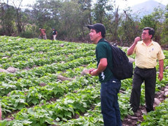 Young coffee plants at FAPECAFES in Ecuador | Bean North Coffee Roasting Co. Ltd.