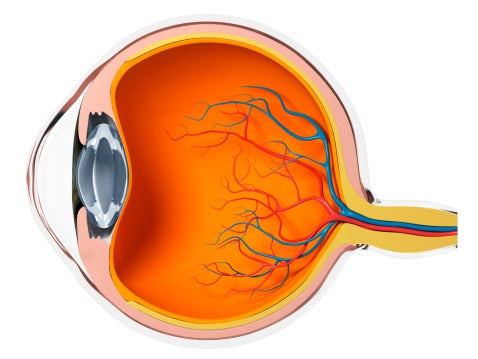 Dry Eye Disease Winnipeg