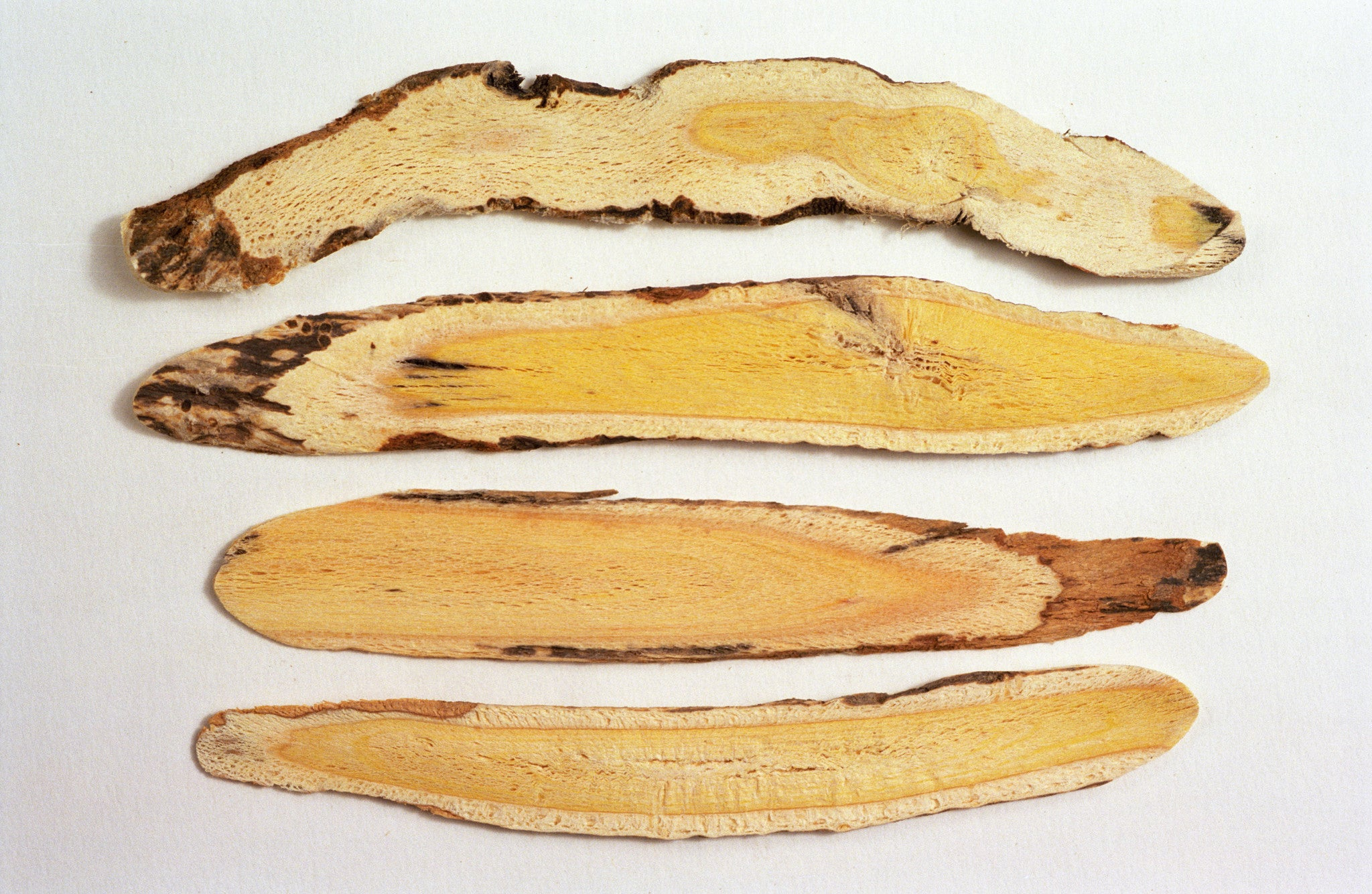 Astragalus - the Anti-Ageing Herb (with recipe)