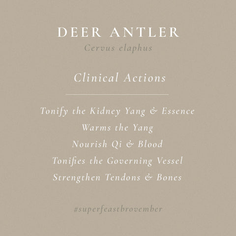 deer-antler-actions