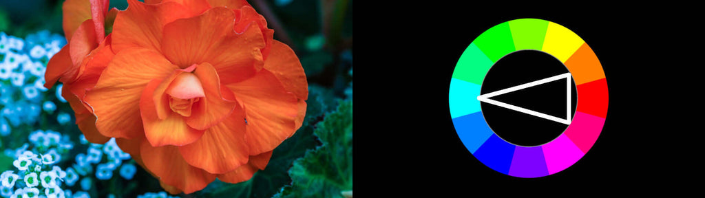 Split Complementary Color Harmony Example