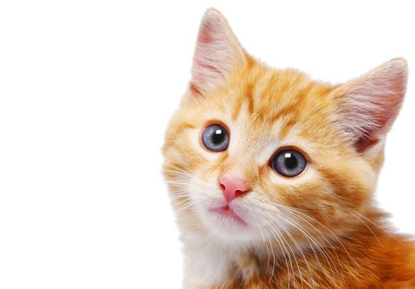 Common kitty health problems – and how to spot them
