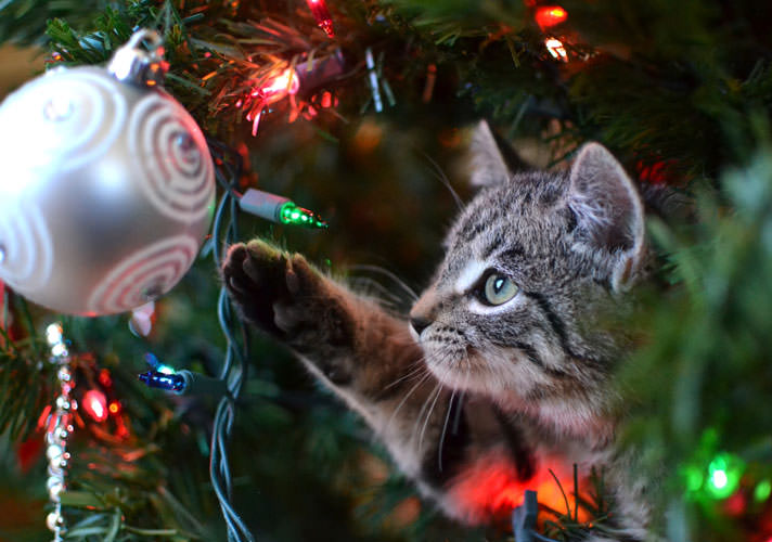 Why Cats Love Christmas Lights and Tinsel