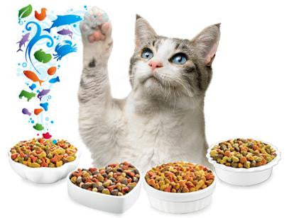 How to Pick a Cat Food