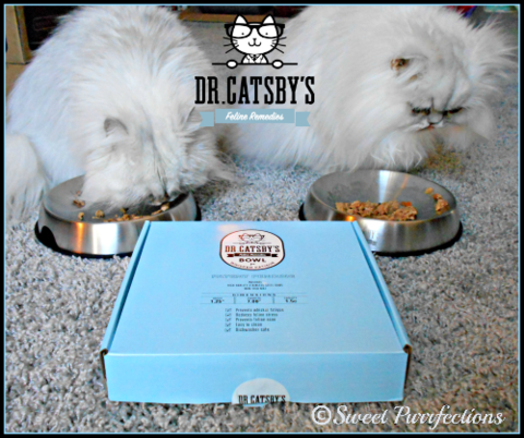 Dr. Catsby Featured on Sweet Purrfections